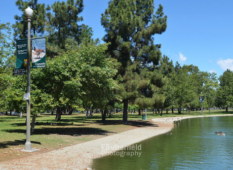 Banners around the El Dorado Park Duck Pond in Long Beach, featuring my photography.