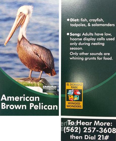 Pelican banner